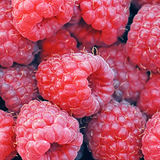 Raspberries background Stock Images