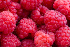 Raspberries background Royalty Free Stock Photography
