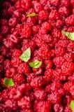 Raspberries background Stock Photography