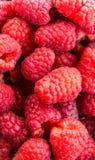 Raspberries background. Fresh sweet raspberries as background Stock Images