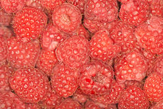 Raspberries, background Stock Photo