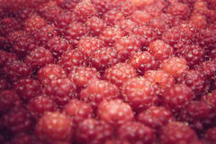 Raspberries background with natural light and selective focus Royalty Free Stock Images