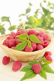 Raspberries in the basket Stock Photo