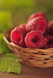 Raspberries in the basket Stock Image
