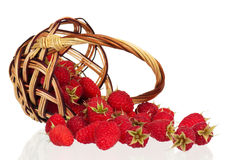 Raspberries in a basket. Ripe raspberries scattered from wicker basket on white background Royalty Free Stock Image