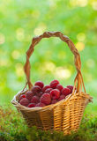 Raspberries in the basket Royalty Free Stock Photos