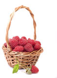 Raspberries in a basket and a few berries Royalty Free Stock Image