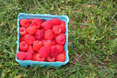 Raspberries in basket Royalty Free Stock Photography