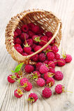 Raspberries in a basket and near. On wooden table Royalty Free Stock Photography