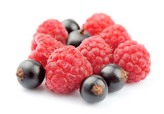 Raspberries and black currant. Close up Stock Image