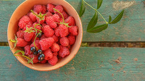 Raspberries and black currants and are collected in a ceramic bowl. stock images