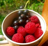 Raspberries and black currants Royalty Free Stock Photo