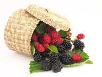 Raspberries and Blackberries Royalty Free Stock Image