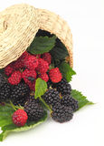 Raspberries and Blackberries Royalty Free Stock Images