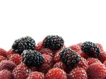 Raspberries and Blackberries. Isolated on white Royalty Free Stock Photos