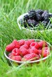 Raspberries and blackberries Stock Image
