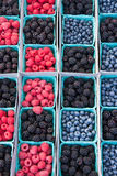 Raspberries blackberries blueberries. In rows of containers Royalty Free Stock Photo