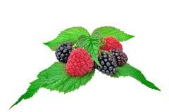 Raspberries and  Blackberries With Leaves Stock Image