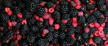 Raspberries and blackberries mixed, 100% Organic, picked fresh washed ready to eat. Fruit background. Stock Image