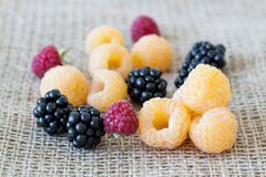 Raspberries and blackberries mixture Royalty Free Stock Photo