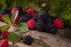 Raspberries and blackberries. With moss on wooden background Royalty Free Stock Photo