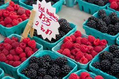 Raspberries and blackberries for sale at farmers' market. Green cardboard pint containers of fresh raspberries and blackberries are lined up on a table at a Stock Photography