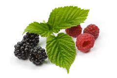 Raspberries and blackberries on white background.  Royalty Free Stock Photography