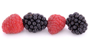 Raspberries and blackberries. On white background Royalty Free Stock Photo