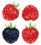 Raspberries & blackberry Royalty Free Stock Image
