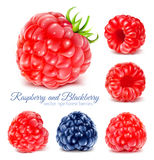 Raspberries and blackberry. Collection of ripe raspberries and blackberry. Vector illustration stock illustration