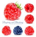 Raspberries and blackberry. Stock Image