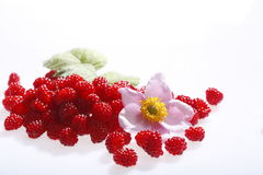 Raspberries and blossoms Stock Photography