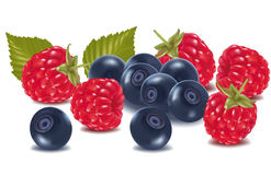 Raspberries and blueberries. Stock Photo