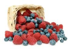 Raspberries, blueberries and wicker basket. Royalty Free Stock Images