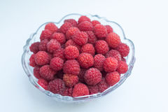 Raspberries in a bowl Royalty Free Stock Photography