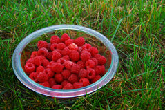 Raspberries in Bowl on Grass. A bowl of freshly picked garden raspberries, sitting on green grass Stock Photo