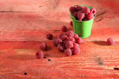 Raspberries in a bucket Stock Photography