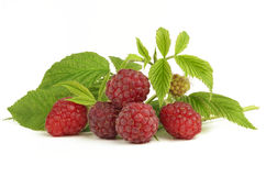 Raspberries. Bunch of raspberries isolated on white background stock photos