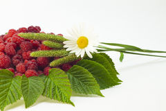Raspberries and camomile. Raspberries on a plate with a camomile on white background Royalty Free Stock Images