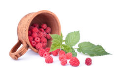 Raspberries in the ceramic cup. Decorated with green sprig Stock Image