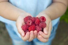 Raspberries in the children's hands Stock Photography