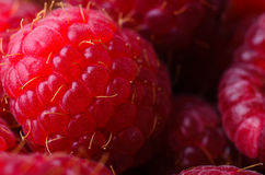 Raspberries Close Up Macro Stock Photo