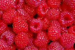 Raspberries close up. Macro photo. Stock Photography