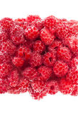 Raspberries covered in bubbles. Juicy raspberries covered in mineral water bubbles Stock Photography