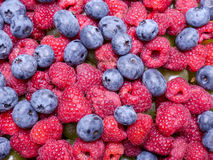 Raspberries and cowberries stock images