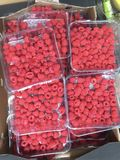 Raspberries. Crate of raspberries for sale in a farmers market Royalty Free Stock Image