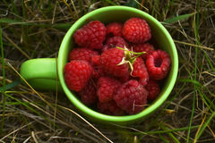 Raspberries in the cup Royalty Free Stock Photo