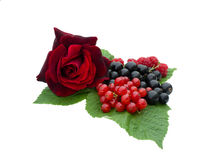 Raspberries, currant and rose. Are on a white background Stock Photography