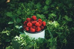 Raspberries for dessert outdoor picnic in the garden. Moody vintage Royalty Free Stock Image