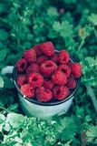 Raspberries for dessert outdoor picnic in the garden. royalty free stock photo